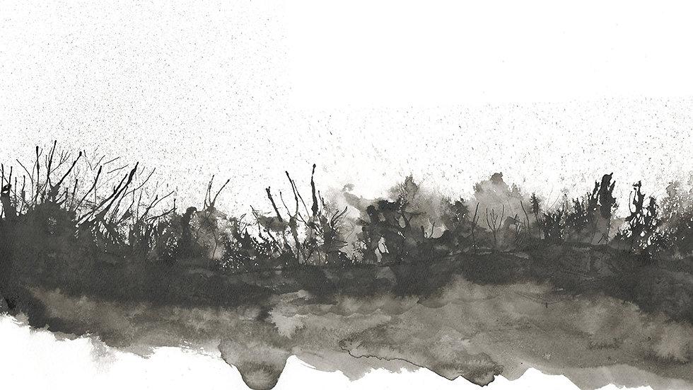 INKY HEDGE // Bucks Mills