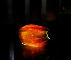 eggplant      三豊ナス