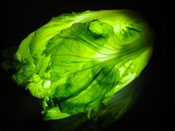 Chinese cabbage ハクサイ