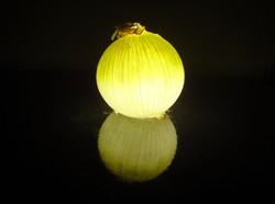 onion  白タマネギ