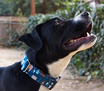 The Fisher Dog Collar