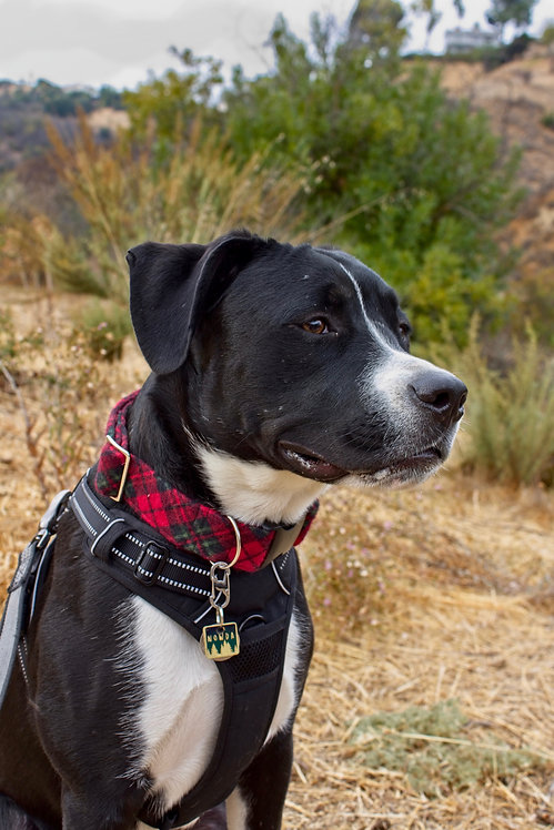 Santa's Helper Flannel Dog Collar