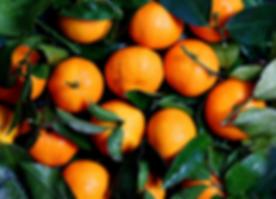 fresh_ingredients_oranges_25.png