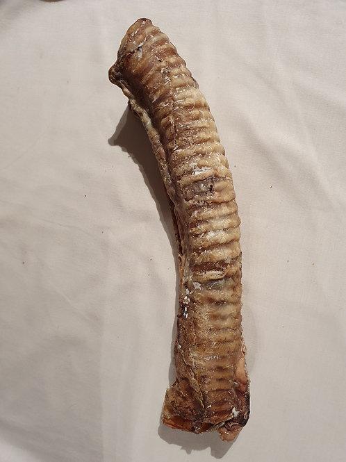 Large Trachea