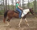 Spice under saddle (1).jpg