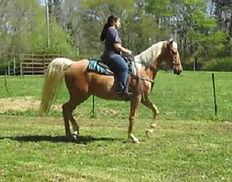 Abby under saddle.jpg