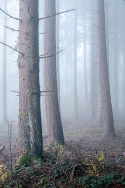 arbres-38.jpg