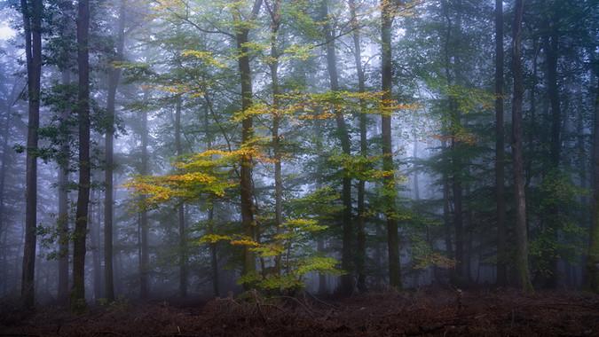 arbres-57.jpg