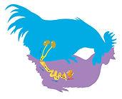 reproduction de la poule ecole vivante 2