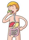 tube digestif Playbac 2006.jpg