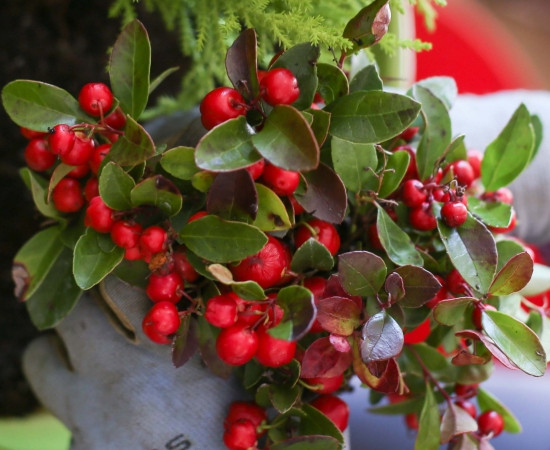Beat the Winter Blues with Wintergreen