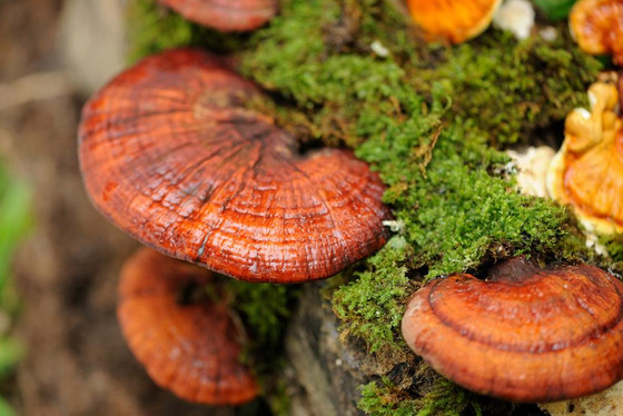 A True Magic Mushroom