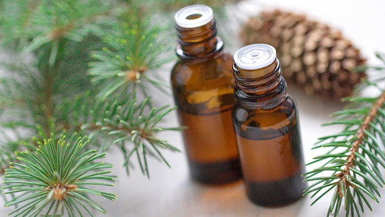 Benefits of Black Spruce Essential Oil