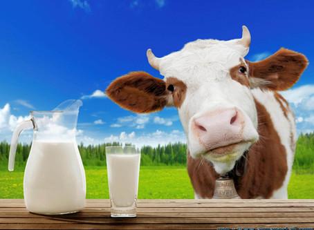 Le lait de vache, mensonges et vérités