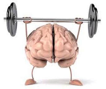 brain weights.jpeg
