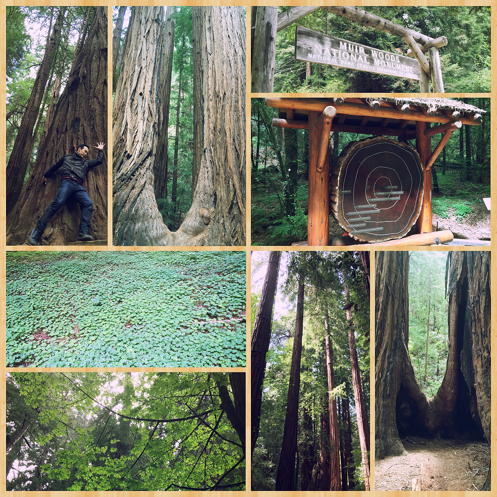 Berkeley, CA (4.20-26.2015)-4.JPG