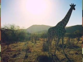 南アフリカ Week-1・ヨハネスブルグ