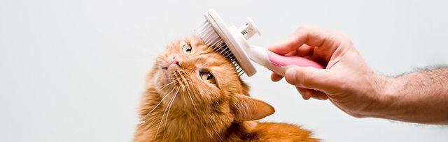 Higiene e Estética Animal