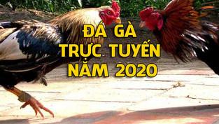 Trực tiếp đá gà Thomo Ngày 10/05/2020 mới nhất