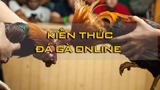 Thương hiệu đá gà trực tuyến uy tín, hợp pháp nhất Việt Nam