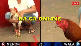 Soi kèo đá gà online tại nhà cái uy tín nhất hiện nay