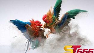 ST666 – Sân chơi cá cược đá gà trực tuyến uy tín hàng đầu tại Châu Á