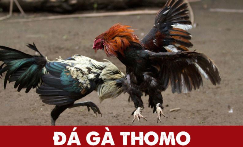da-ga-thomo
