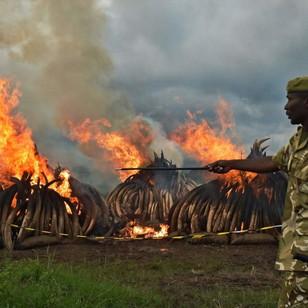 Kenya's Ivory Burn: Constructive or Condemnable?