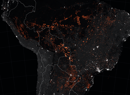 Environmental Catastrophe in the Amazon – Our Lungs are on Fire