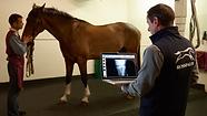 VeterinaryMedicine1_Horos WS.png