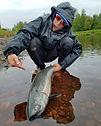 King Salmon Deshka River2.jpg