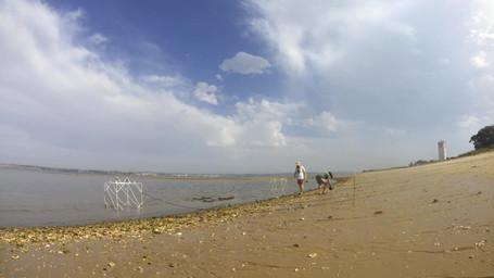 Field work in Tagus