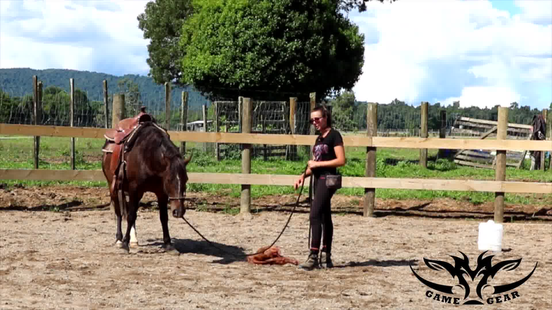 Teaching Your Horse to Carry out an Animal - Introducing the Deer Skin