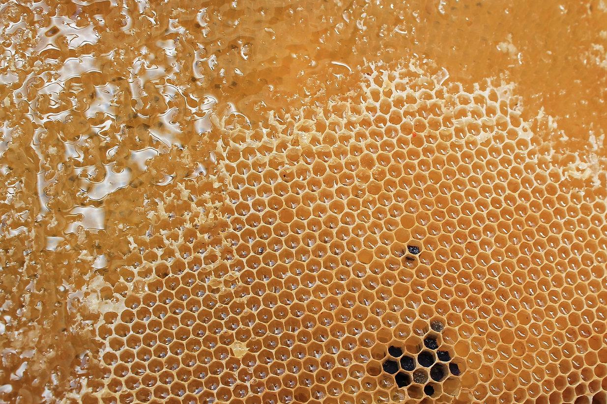 honeycomb-1564957_1920.jpg