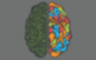 brain 2 comp.png