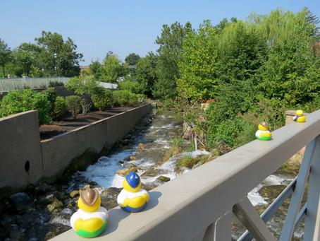 Duck Derby Boasts Cash Prizes, Family Fun