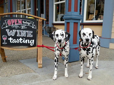 17 Best Dog-Friendly Wineries in Sonoma