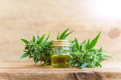 CBD plant and oil