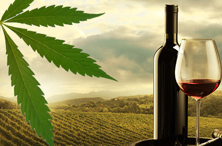Legalized Cannabis Could Devastate Us Wine Industry, Analyst Warns