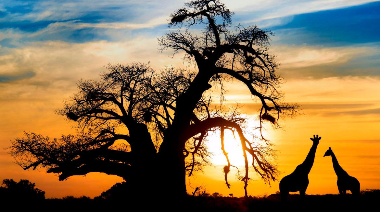 botswana_sunset-giraffes-e1493824917678-