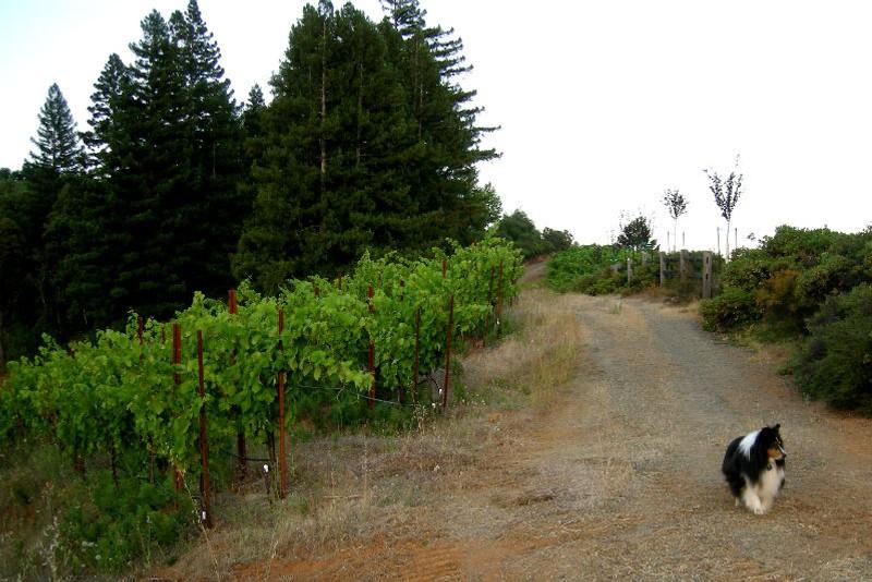 Amista Vineyards Dry Creek Heldsburg