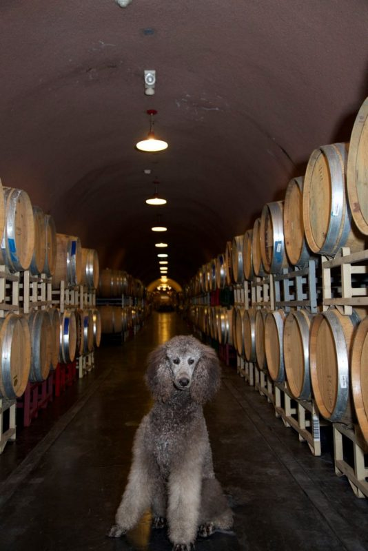 DeerField Ranch Winery- Kenwood