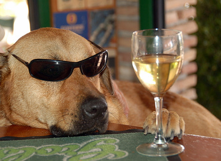 We Often Get Asked Will A Sip Of Wine Hurt Our Dog?