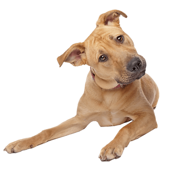 cute-dog-transparent-background.png