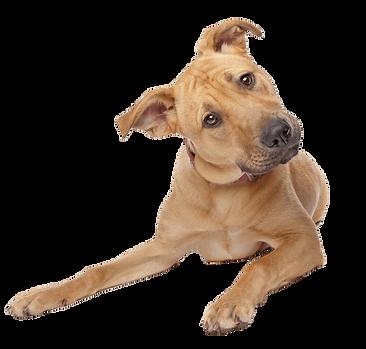 cute-dog-transparent-background.png