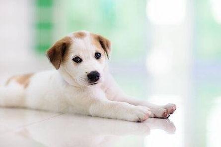 puppy-indoors.jpg