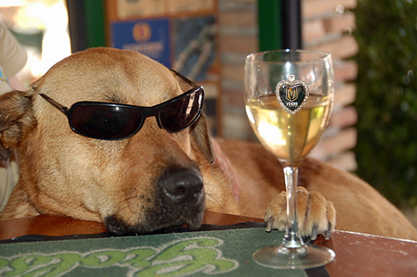 Dog Wine Knights-150.png