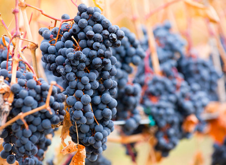 2018 Ushers in Favorable Wine Trends