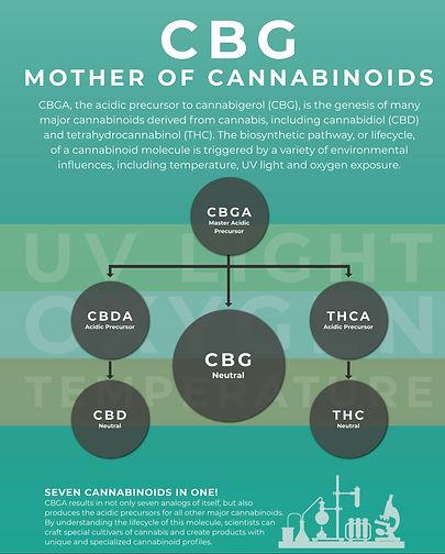 CBG-Mother-of-Cannabinoids
