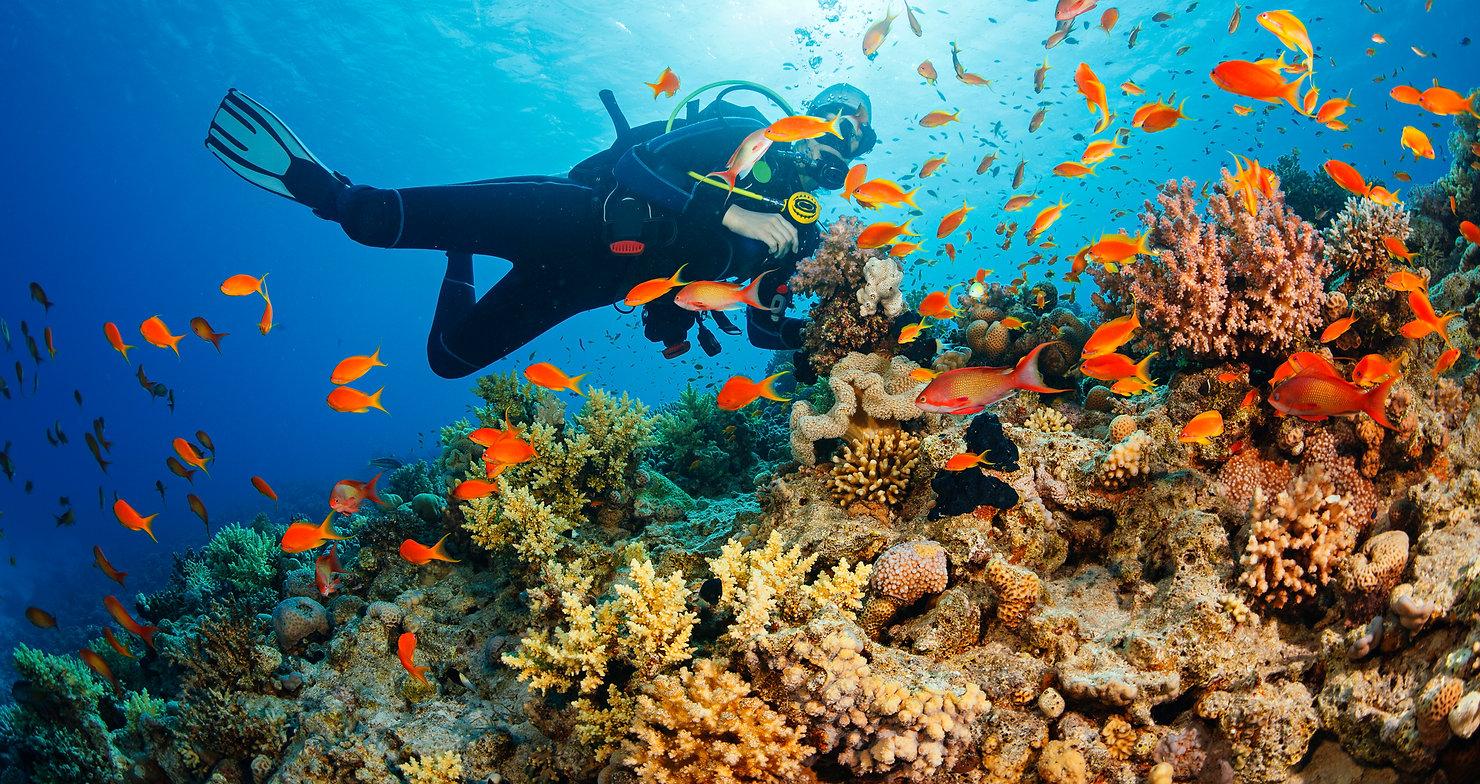 170202-coral-reef-mn-1055_4efac07fd3b4ea